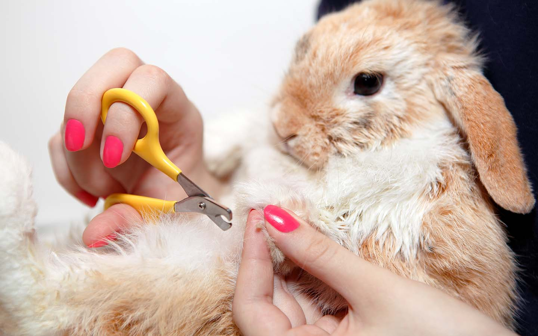 rabbit grooming service Dubai