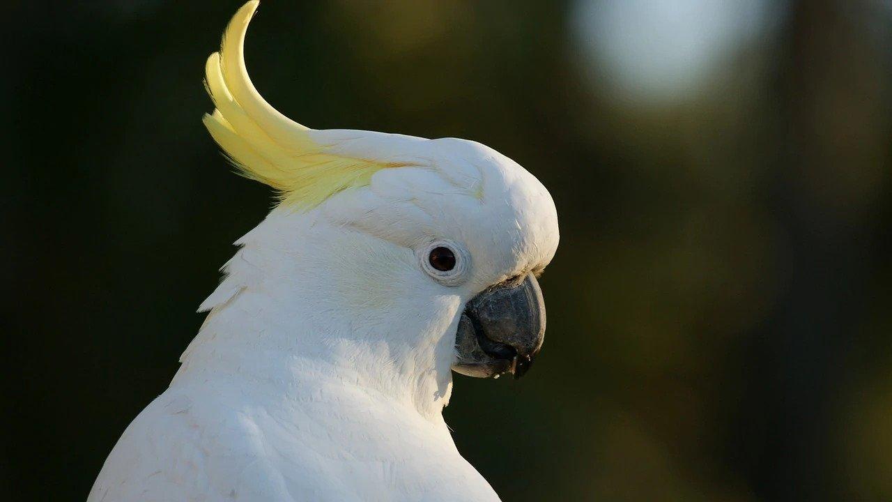bird grooming Dubai